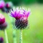 iPad, Retina-taustakuva: kukka